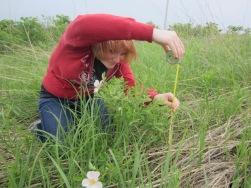 aoa-katherine-measures-plant-height-2