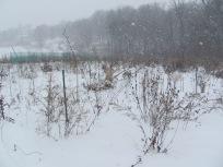 biocore_winter_lml